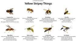 Interesting Ammonia A Comprehensive Guide To Yellow Stripey Things Bees How To Kill Ground Bees Home Remedy How To Kill Ground Bees