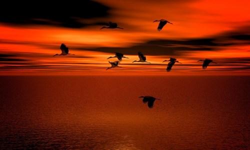 sunset-2576022_960_720