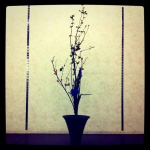 ボケの花の生花