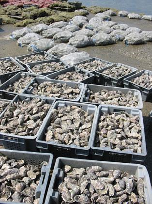 oyster_farm.jpg