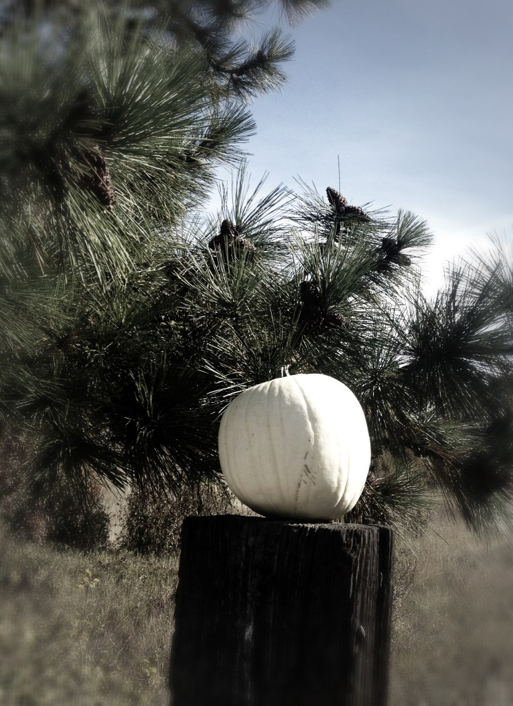 Pretty perfect white pumpkin. These were placed on every fence post at the entrance.