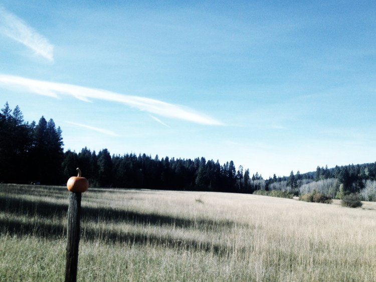 Gorgeous day in the Pacific NW.