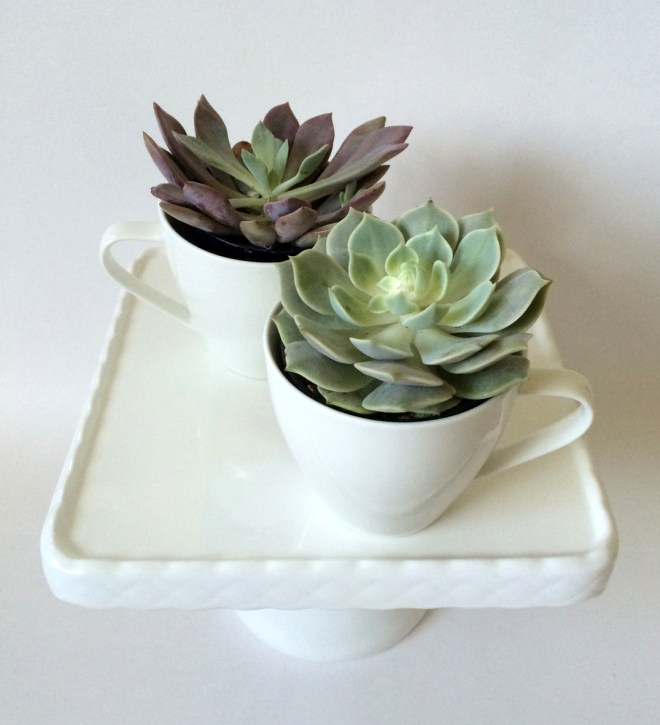A modern & simple idea on how to display succulents by kraft&mint