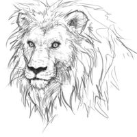 Ako kresliť leva