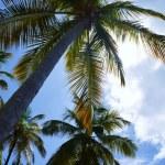 St.Lucia_26_Anse_Beach