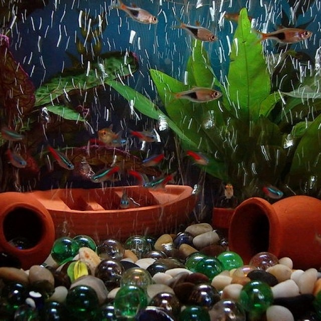 Drawbacks of Rocks and Woods as Aquarium Decor | Aquarium Direct Inc
