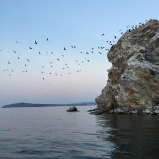 Baikalsee Möwen Abflug