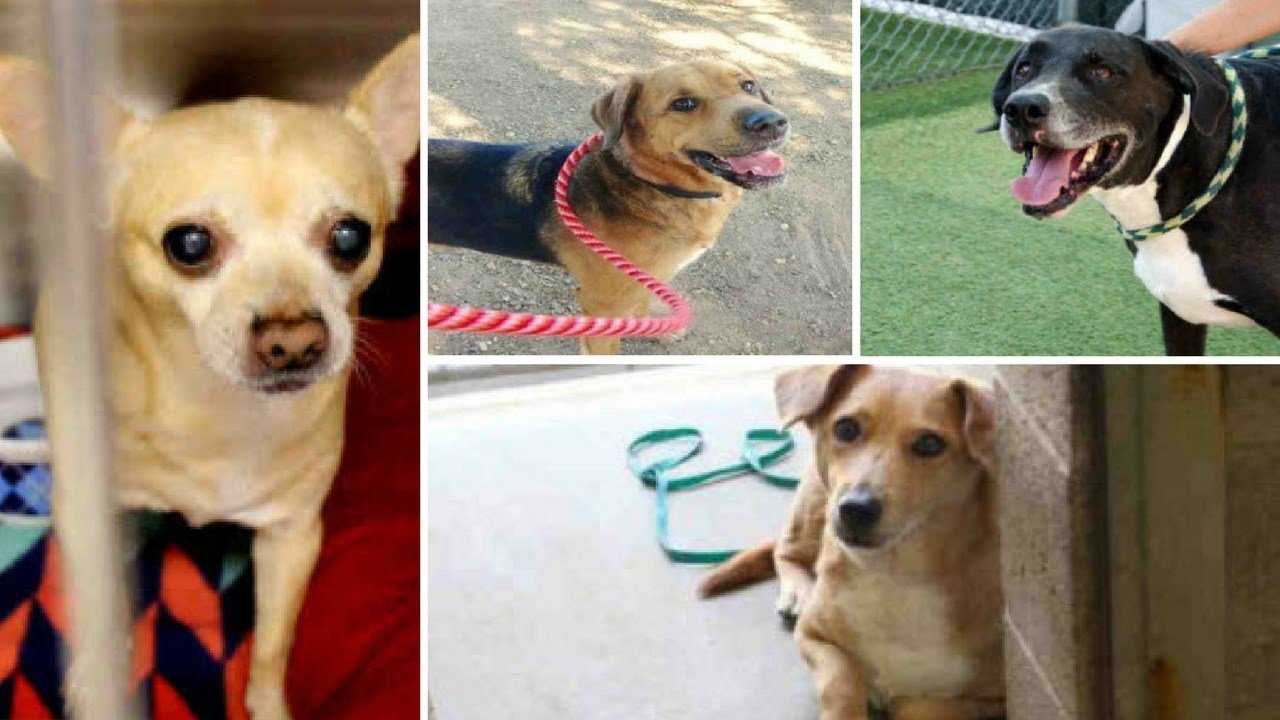 Fullsize Of Maricopa Animal Care And Control