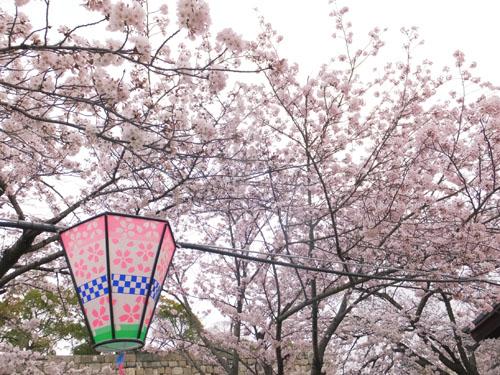 大阪城公園 西の丸庭園 桜