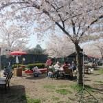 大阪城公園 バーベキュー全面有料化 お花見