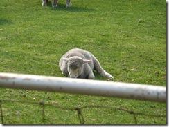 羊ヶ丘展望台・子羊