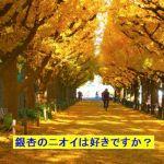 秋になると香る銀杏のニオイは臭いと思いますか?それとも好きですか?