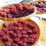 梅干しの紫蘇を入れるタイミングはいつ梅酢の使い方や保存方法賞味期限は?