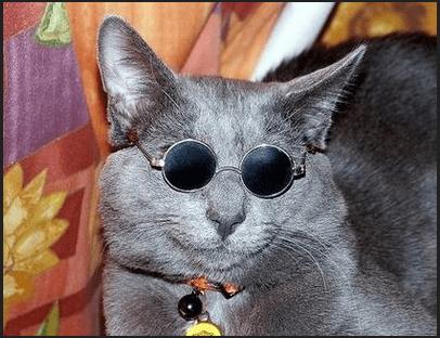 catglasses