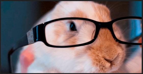 rabbit glasses.