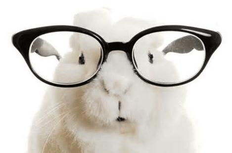 rabbit glasses..