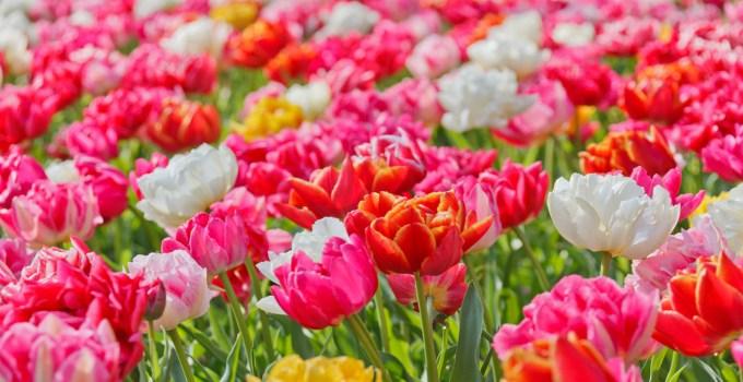 Gambar Jenis-jenis Bunga