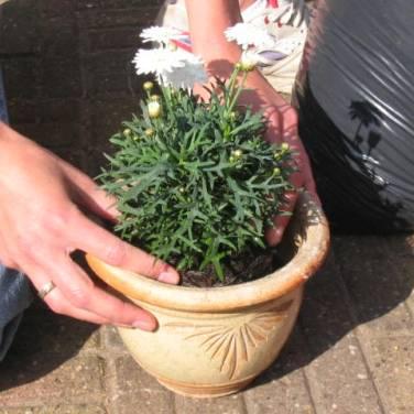 Zet de plant in de pot