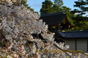 White Petals and Imperial Roof 012