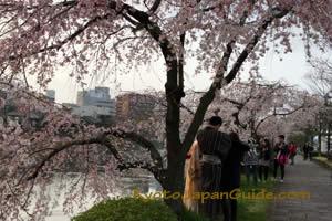 Yukata and Weeping Sakura 031