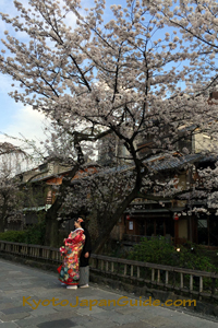 Gion District kimono and cherry tree 073