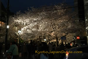 Gion District sakura night time 007