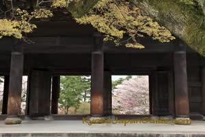 Nanzen-ji doorways with sakura 031