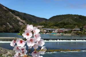 Sakura and Hozugawa River 051