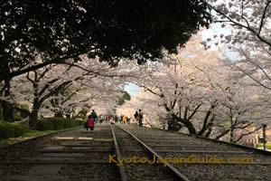 Sakura on Keage Incline Kyoto 021