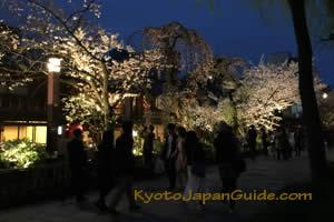 Tatsumi-dori evening cherry blossoms 001