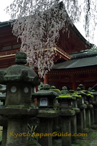 Weeping sakura and stone lamps 013