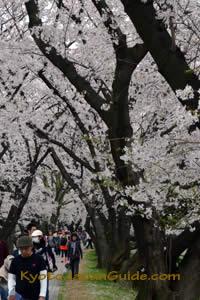 Yawata-shi River Front Park 053