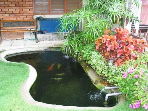 KY Koi Pond Garden
