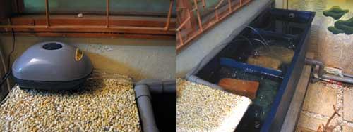 filter system for koi pond