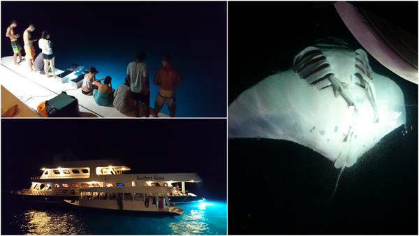 light attracts planktons, which attract the beautiful manta rays