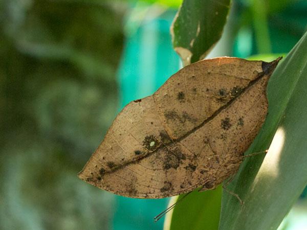 this isn't a dead leaf