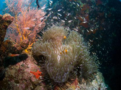 this would make a good aquarium backdrop