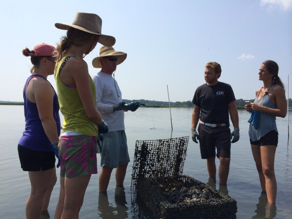 Chris Ludford, de Pleasure House Oysters, fait vivre aux touristes l'expérience de la récolte-dégustation d'huîtres Lynnhaven. (Photo: Visit Virginia Beach)