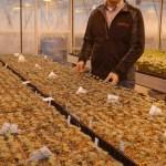 Viliam Zvalo, chercheur en production de légumes au Centre de recherche et d'innovation de Vineland.