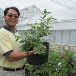 Youbin Zheng et un plant de bleuets en pot à Vineland.