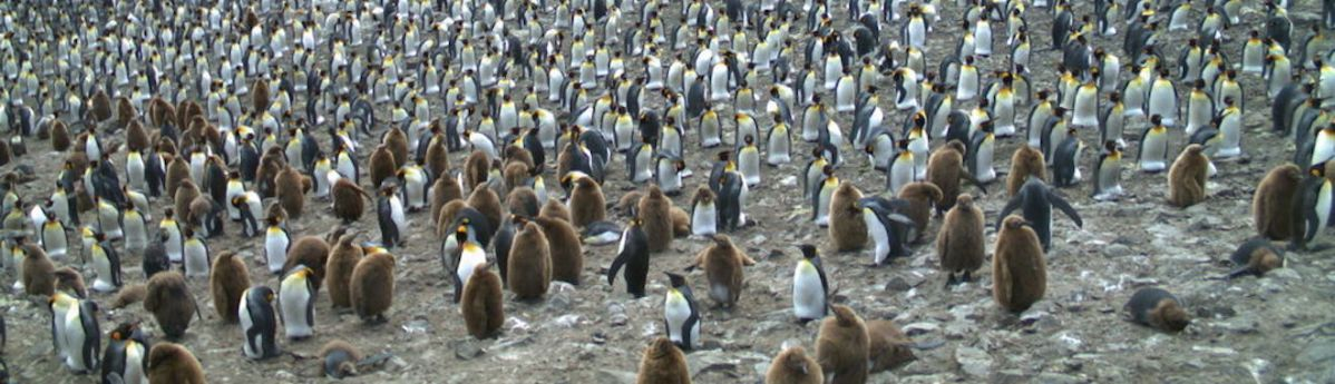 Click on Penguins for Science