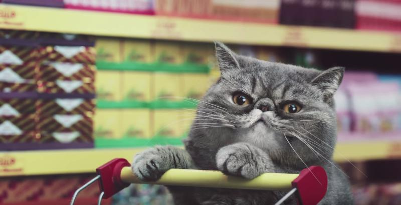 netto-cats-advert04
