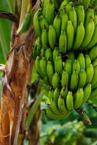 banane aliments pas mettre frigo