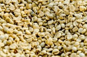 grains cafe verts
