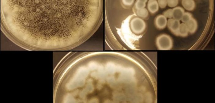 Now Fungus Can Recycle Your Cell Phone Battery