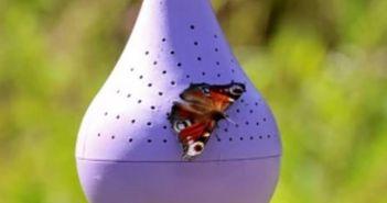 Backyard Butterfly Feeder