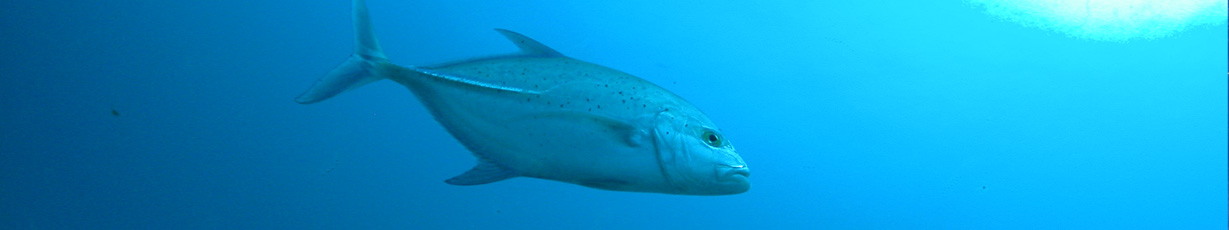 Fishing_on_La_Digue_Island_Seychelles_slider05