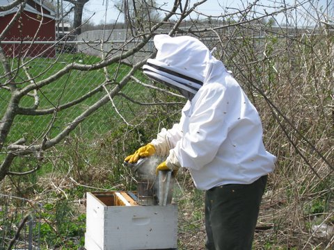 Installing Nucs Into Hives