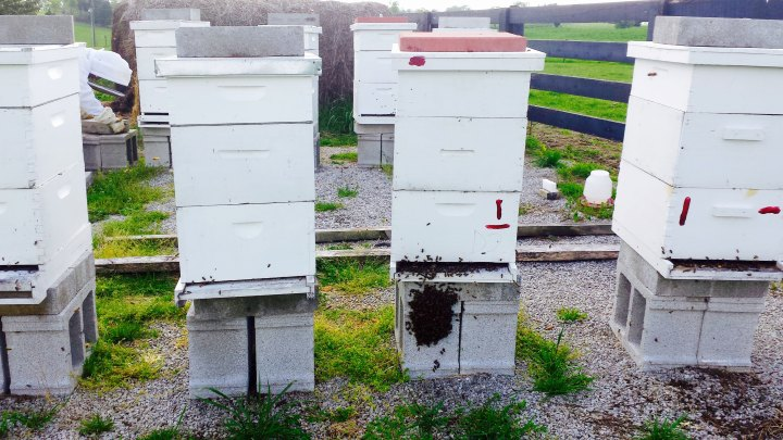 Bee Hives Ready to Swarm Anytime