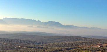 El mar de Olivos de Jaén desde los Cerros de Úbeda